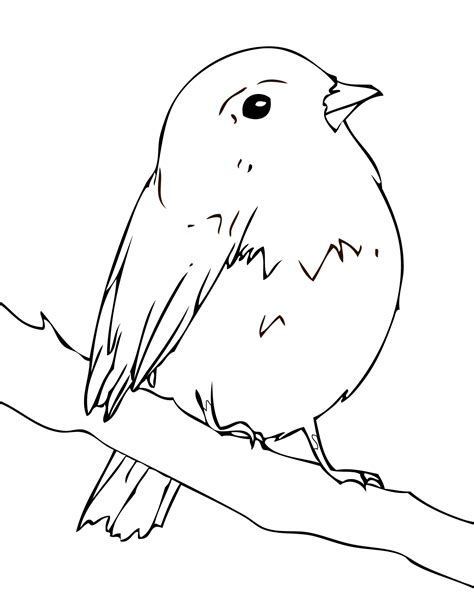 Free American Robin Coloring Pages