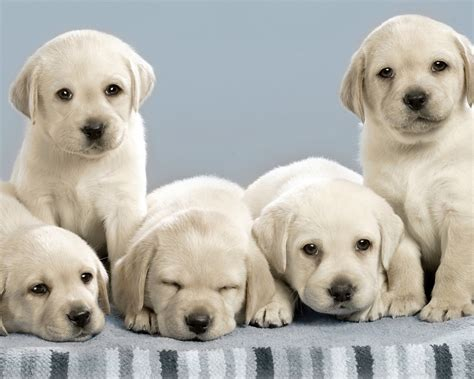 images  dog wallpaper cute funny beautiful puppies