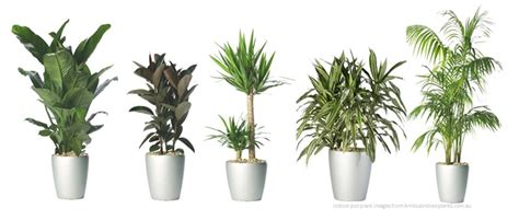 plant indoor indoor plants design of your house its good idea for