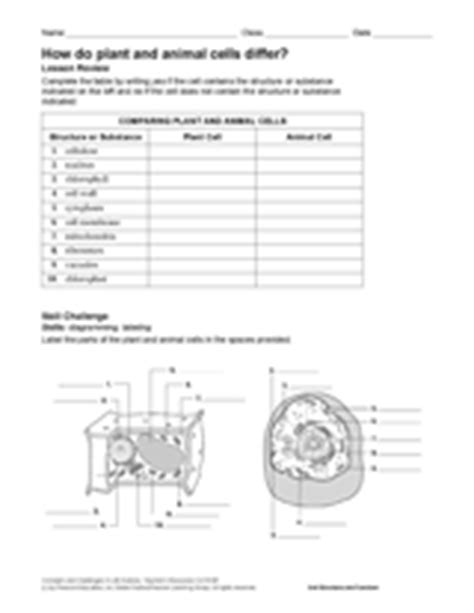printable animal and plant cell quiz how do plant and animal cells differ printable 6th