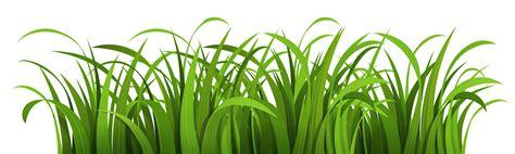 pngpix  grass vector png transparent image