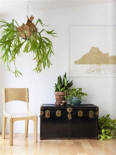 fern decor 20 fresh and natural decorations with staghorn fern home