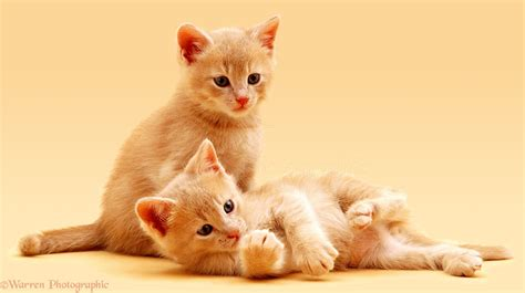 kitten background kittens on background photo wp02763