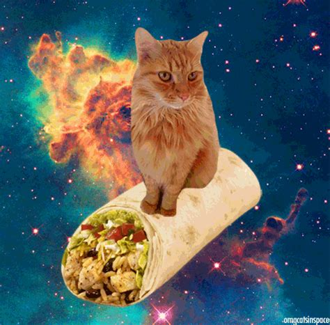 Cat In Space animated gifs of cats floating amongst galaxies