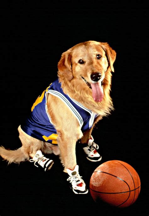 air buddy cineplex air bud a family favourites presentation