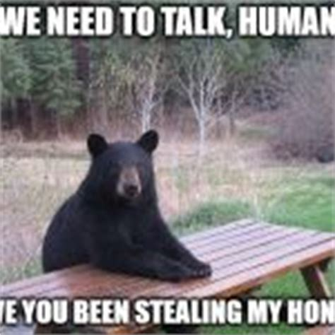 Bear At Picnic Table Meme - bear at picnic table meme generator imgflip