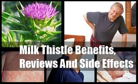 Now Liver Detox Side Effects by 25 Best Ideas About Milk Thistle On Milk