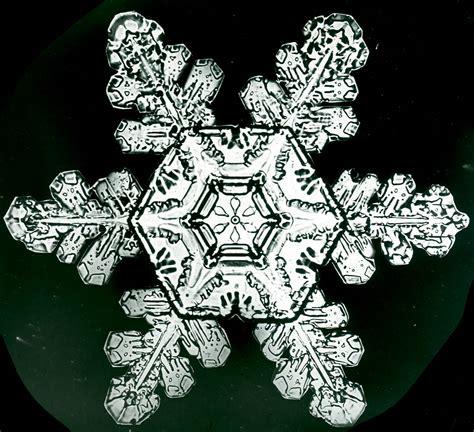 snowflake wilson bentley 1000 images about snowflake bentley on pinterest