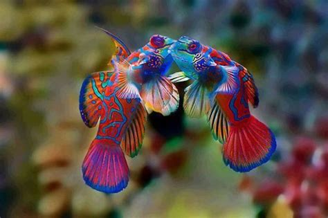 colorful animals 21 unusually colorful animals you won t believe are real