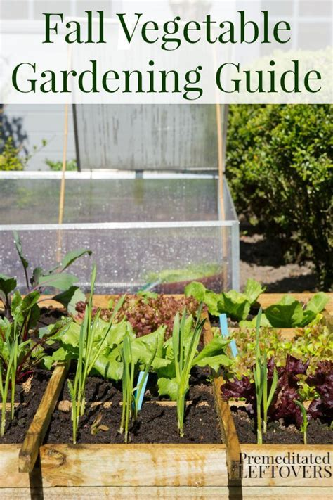 fall garden planting schedule 17 best ideas about fall vegetable gardening on