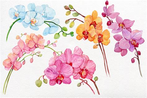 watercolor clipart watercolor clipart orchids wreaths by clipart shop