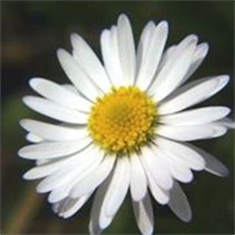 fiori simili alle fiore simile alla rosa 28 images aboutgarden pagina 2