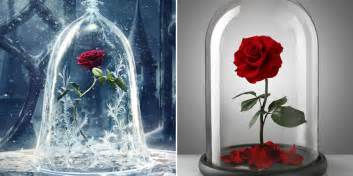 rose in beauty and the beast you can now buy the beauty and the beast enchanted rose