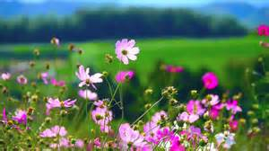 Flowers 55   Video Background HD 1080p   YouTube