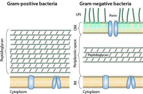 bacteria understand react