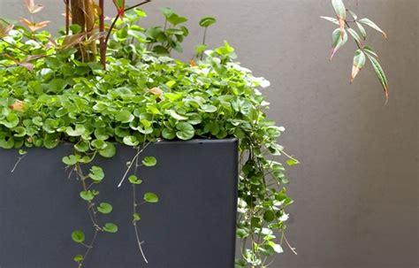 cascading plants  homes  gardens