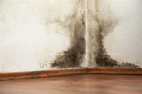 Schwarzer Schimmel An Der Wand 5035 by Schimmel Entfernen Mit Hausmitteln 9 Tipps Tricks