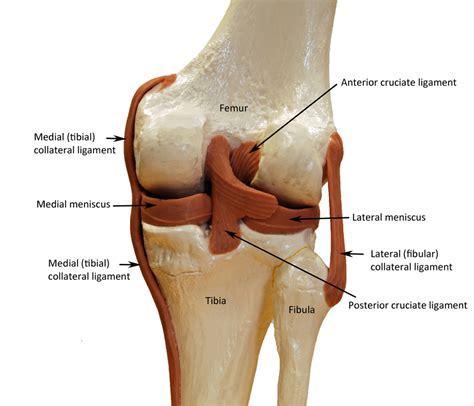 diagram of left knee blank knee joint diagram www imgkid the image kid