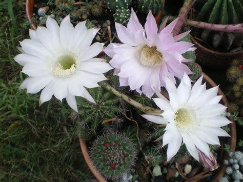 piante in fiore nonsolospine vilma