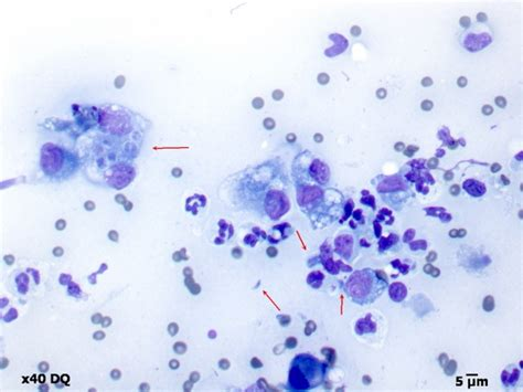 toxoplasmosis in dogs canine blood in stool paws claws vet clinic what is parvovirus does your