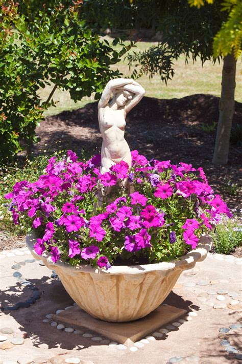 china doll linden best pot plants for sun and shade burke s backyard