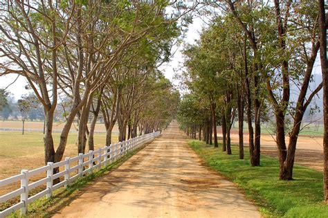 imagenes de paisajes y caminos banco de im 193 genes camino rural en paisaje con grandes