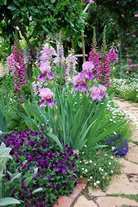 iris flower garden s ears irises foxglove margarite and ground covers