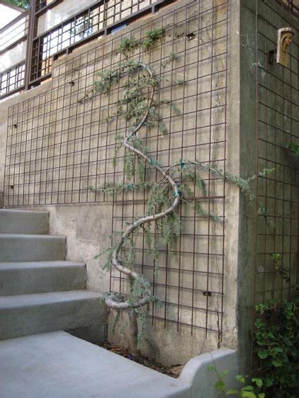 terrabella inc traditional landscape by terrabella inc i love squiggly