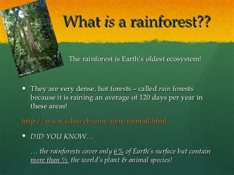 Rainforests Powerpoint Rainforest Powerpoint
