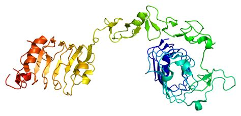 2 proteins in the human insulin like growth factor 1 receptor