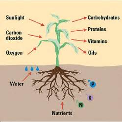 Tom s facts on organic nutrients and marijuana in soil