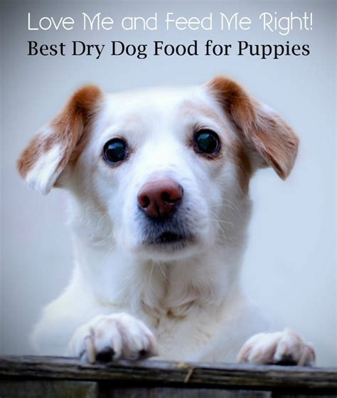 top food for puppies choosing the best food for your puppy