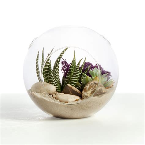 muddy toes terrariums local delivery pick