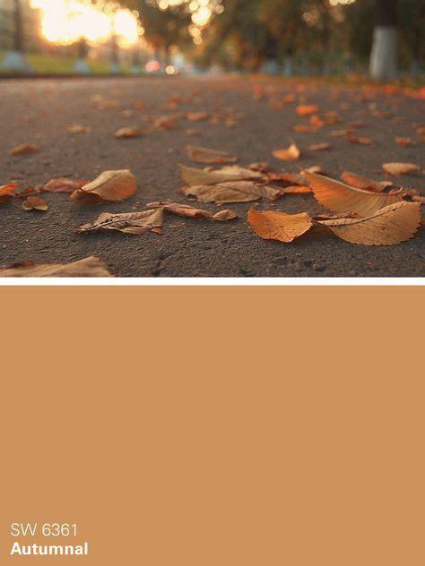 59 best images about all about orange orange paint colors on paint colors accent