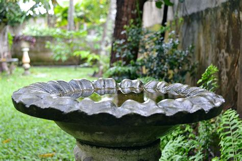 keep your bird bath clean and safe this summer the