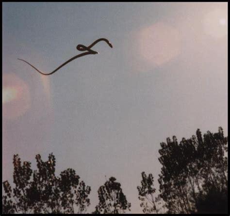 serpenti volanti il pentagono indaga sul segreto dei serpenti volanti