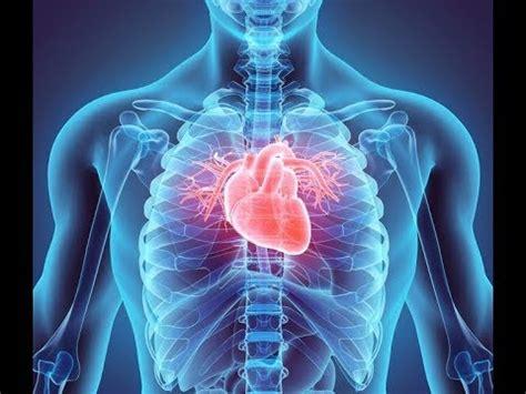 cardiovascular system cardiac cycle youtube