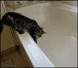 no water in bathtub cat falling in tub with no water freaks out damn lol