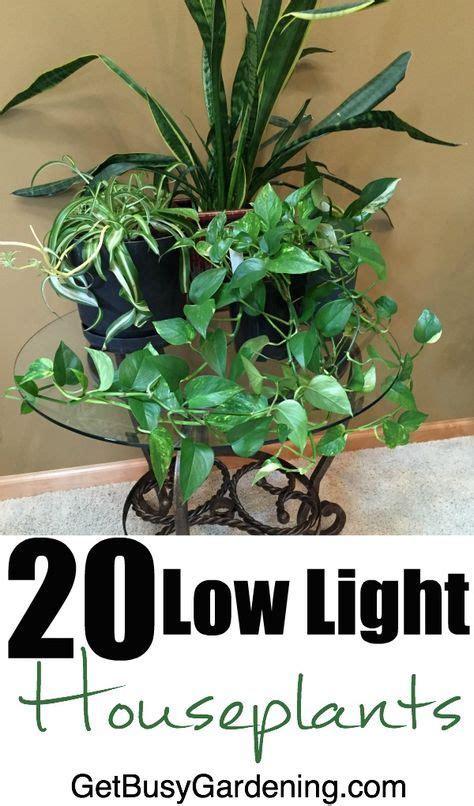 light indoor plants   easy  grow plants