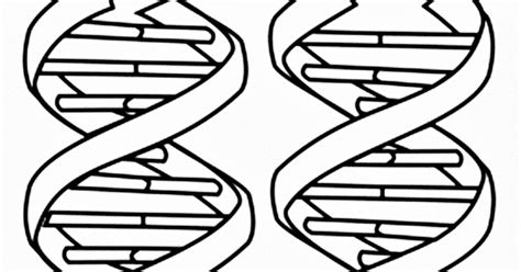 ausmalbilder malvorlagen images of dna coloring pages