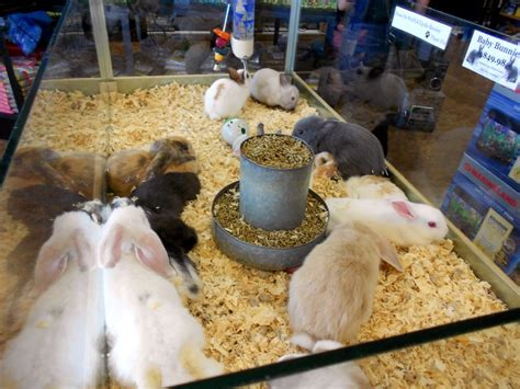 pet shop puppies for sale the city of sacramento ca bans the retail sale of dogs