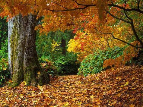 imagenes otoñales hd oto 241 o bosque fondos de pantalla oto 241 o bosque fotos gratis