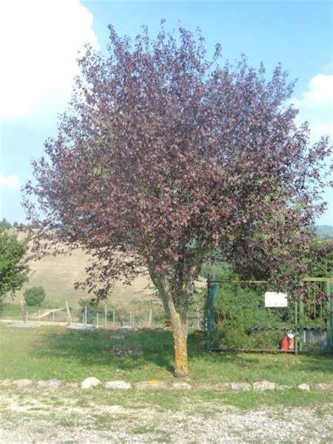 piante da mettere in giardino la finestra di stefania come scegliere un albero da