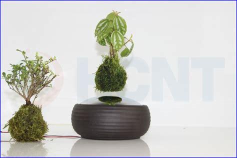 Pot Pohon Melayang Levitating Floating Plant manufacturer air levitating potted plant bonsai buy potted plant bonsai levitating