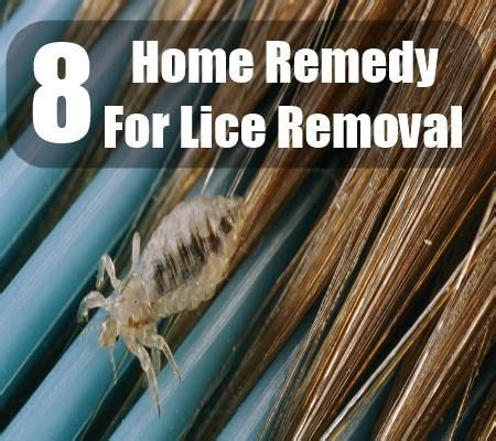 8 home remedies for lice removal home remedies