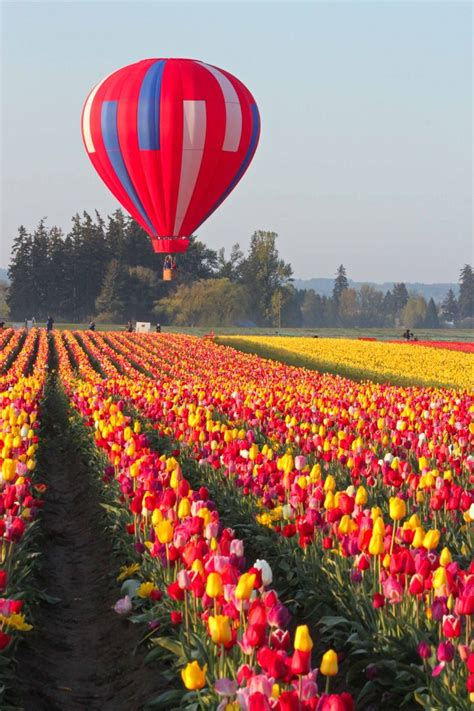 tulip feilds 25 best ideas about tulip fields on pinterest tulip