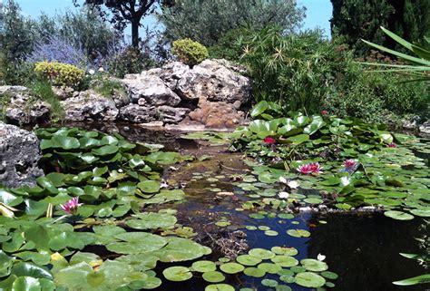 giardini acquatici home vivaio e stefanelli todi