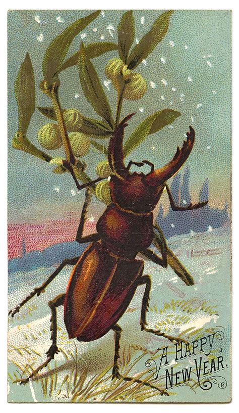 old vintage images antique graphic new year beetle the graphics fairy