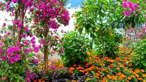 flower garden pictures free ujecdent