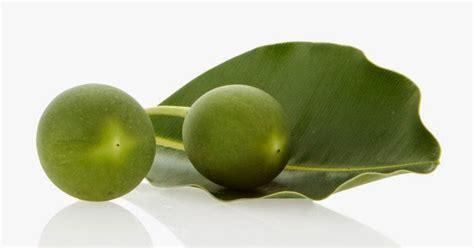 Obat Tetes Herbal Mata Care obat mata radix vitae minyak tanamu tanami